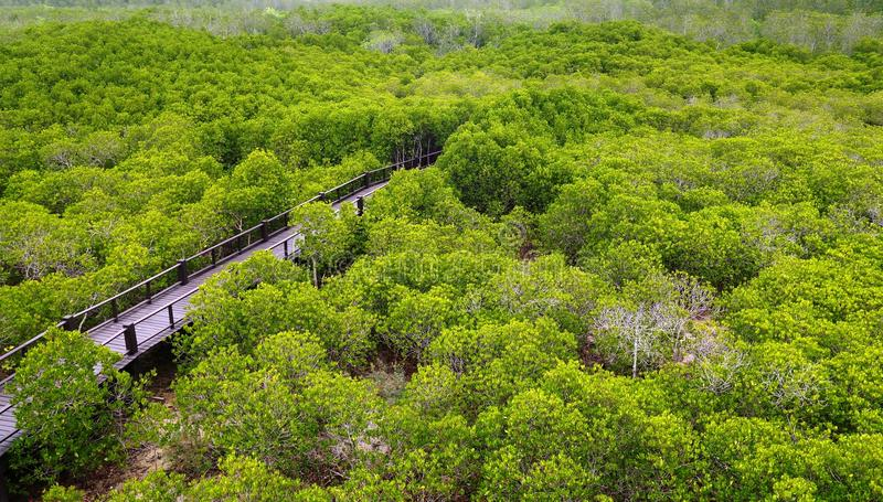 Aerial view of mangrove forest royalty free stock image