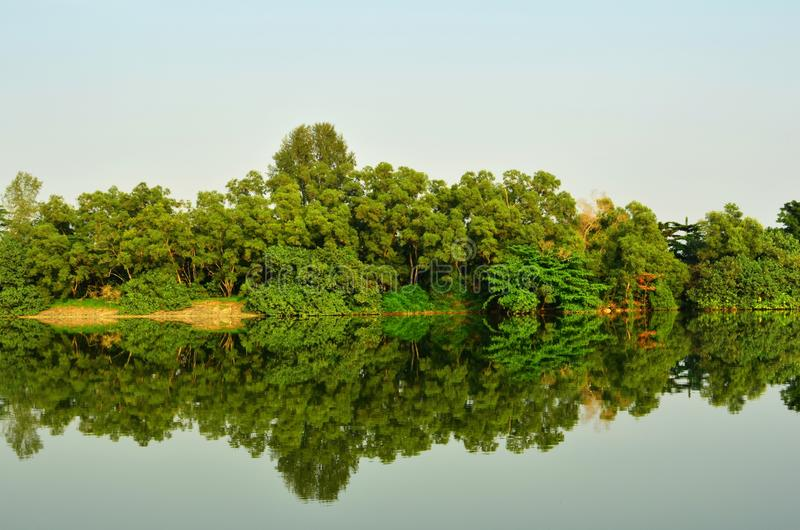 Mangrove Forest Reflection stock photos