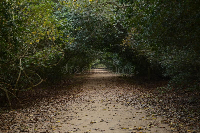 Mangrove forest royalty free stock photography