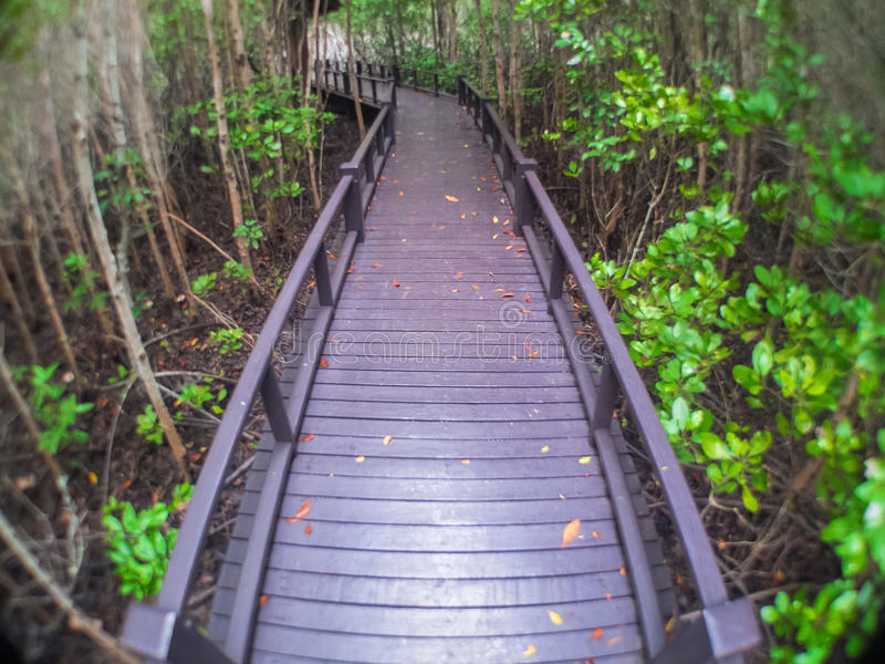 The mangrove forest Walk. In Prachuap Khiri Khan Province royalty free stock images