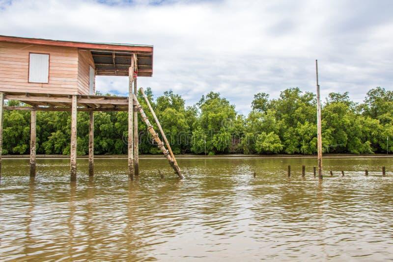 Mangrove forsten auf stockbild