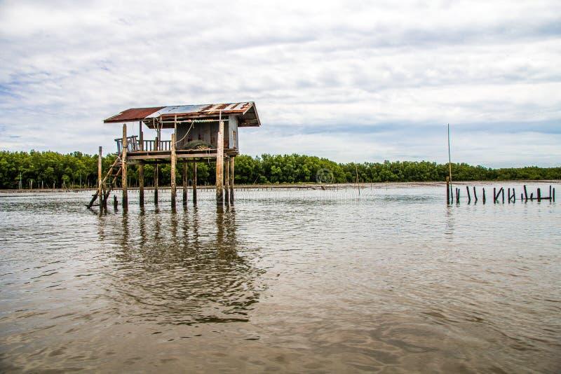 Mangrove forsten auf lizenzfreies stockbild