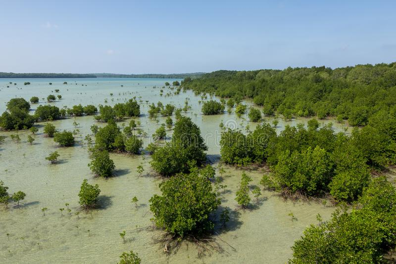 Mangrove gröna Karimun Jawa arkivfoton