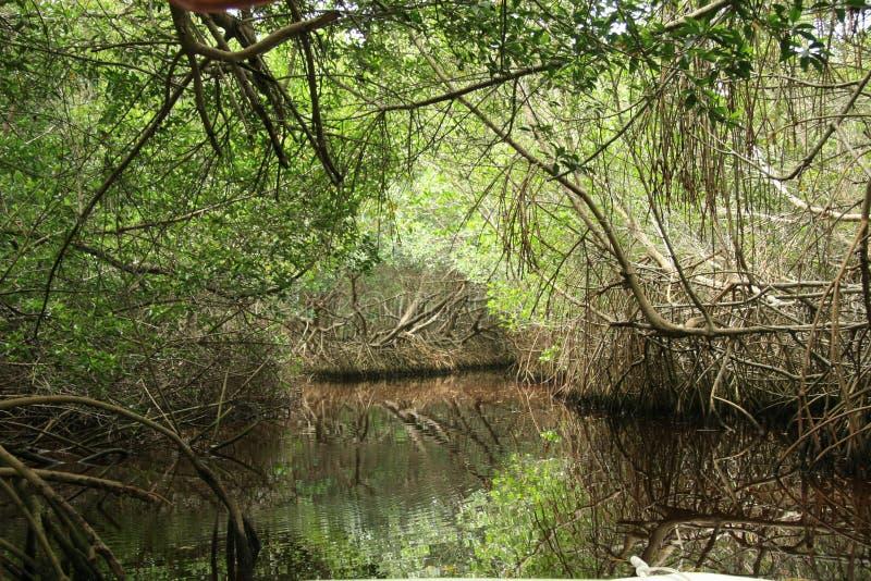 The river habitat at Celestun, Mexico royalty free stock photography