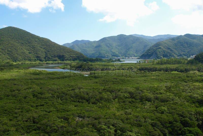 Mangrove in Japan stockfotografie