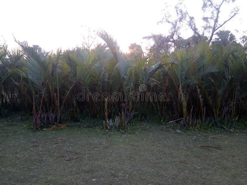 Mangrove jungle royalty free stock photo