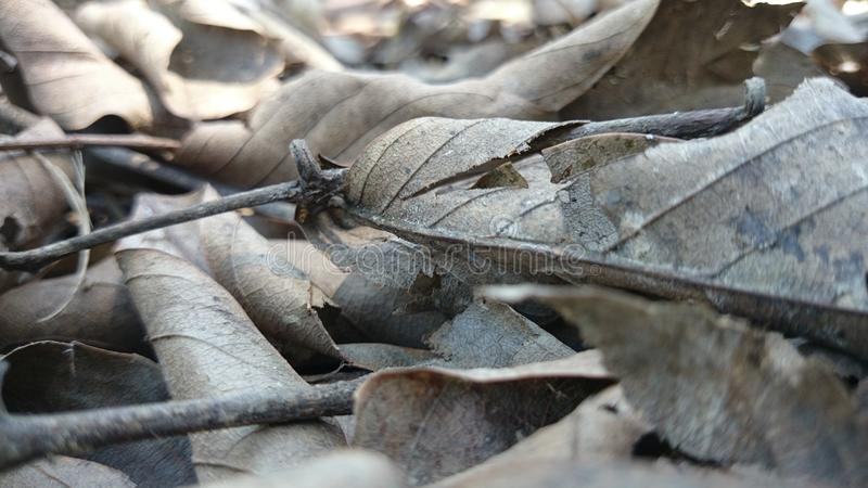 A mangrove royalty free stock photos