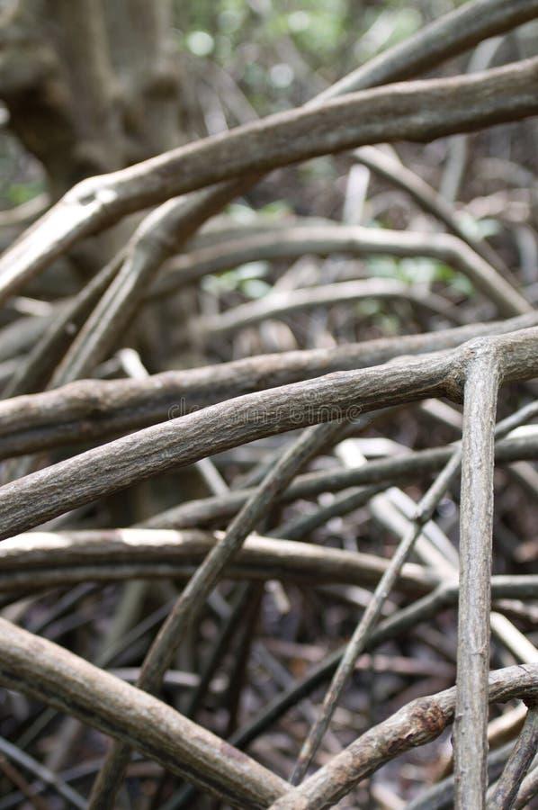 Mangrove root stock image