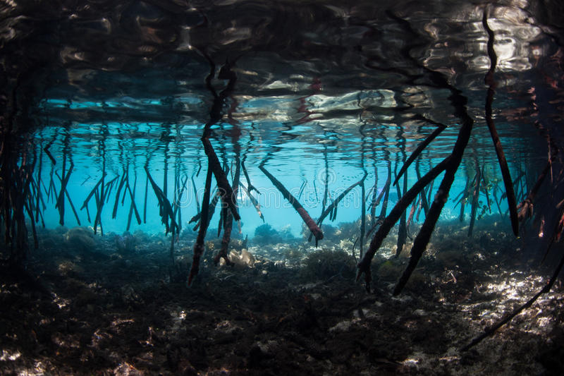 Mangrove Tree Underwater