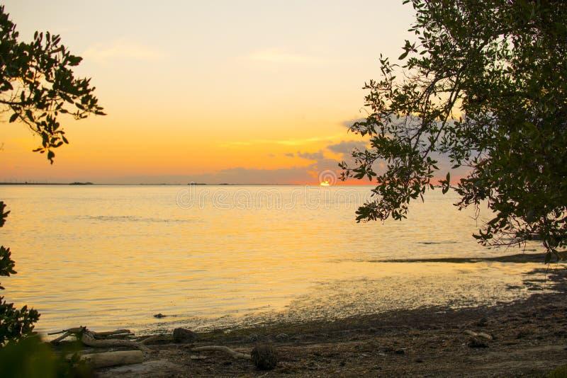 Mangrove Sunrise royalty free stock photo