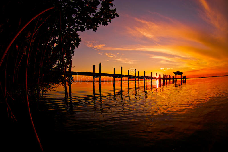 Mangrove Sunset royalty free stock image