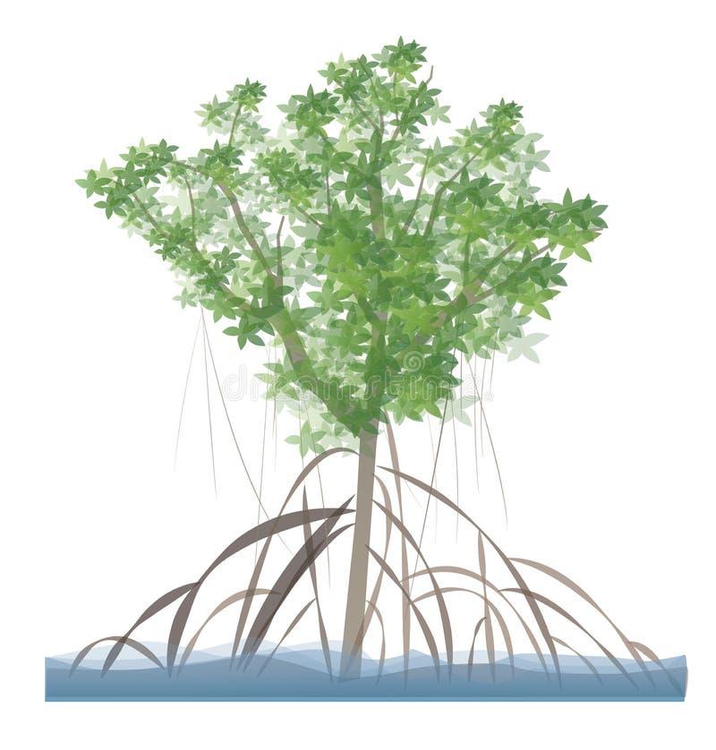 Mangrove Tree royalty free stock photos
