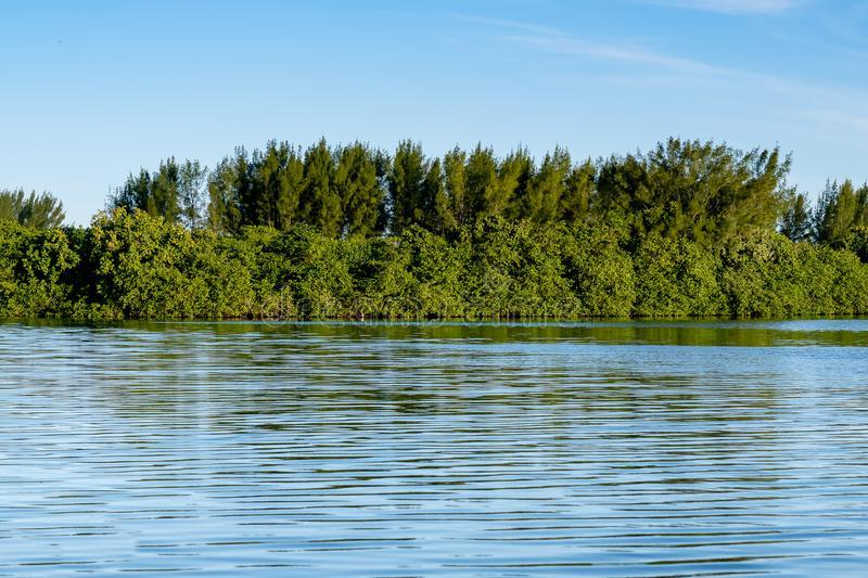 Mangrove trees and other vegetation growing on the edge of Marapendi Lagoon, in Barra da Tijuca, Rio de Janeiro.  royalty free stock image