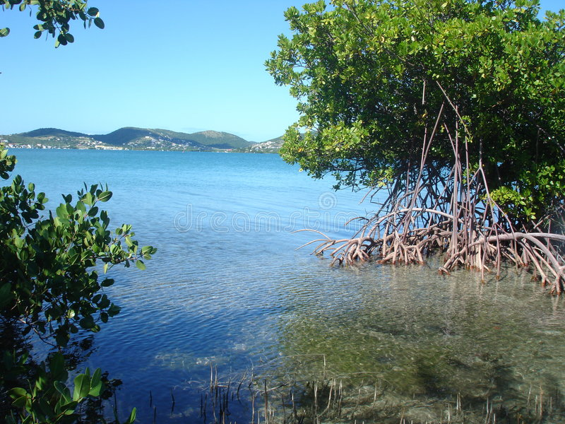 Download Mangrove View, Puerto Rico, Caribbean Stock Image - Image of temperate, tropical: 734273
