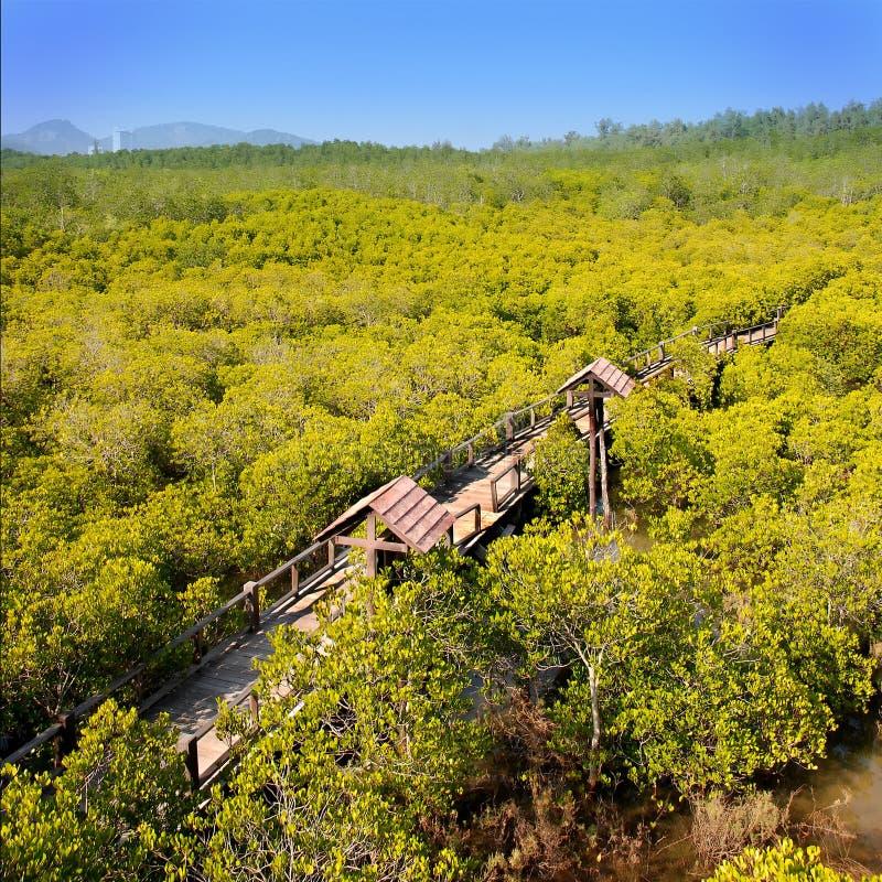 Mangrove-Wald lizenzfreie stockfotos