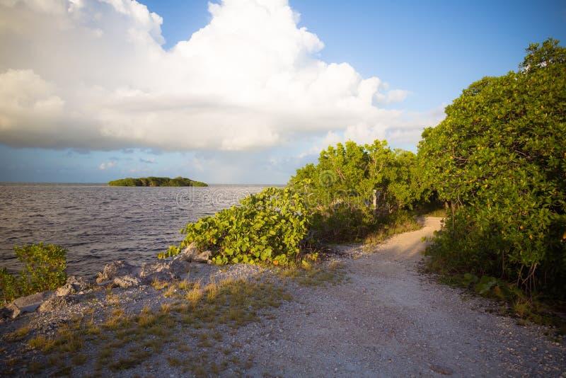Mangrovebanasikt i de Florida tangenterna royaltyfri bild