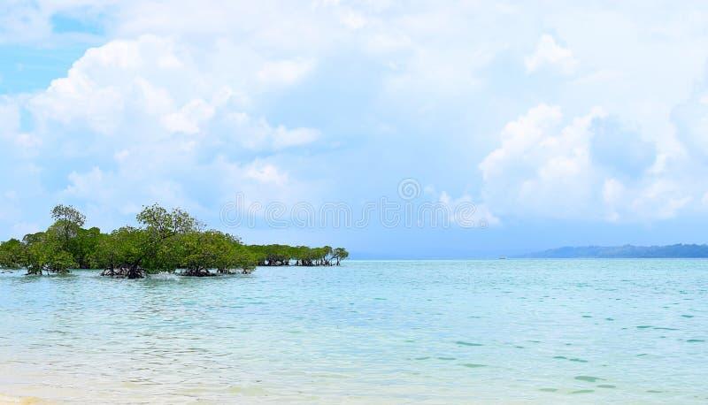 Mangrovebomen in Crystal Clear Transparent Blue Sea-Water met Bewolkte Hemel - Neil Island, de Eilanden van Andaman Nicobar, Indi royalty-vrije stock foto