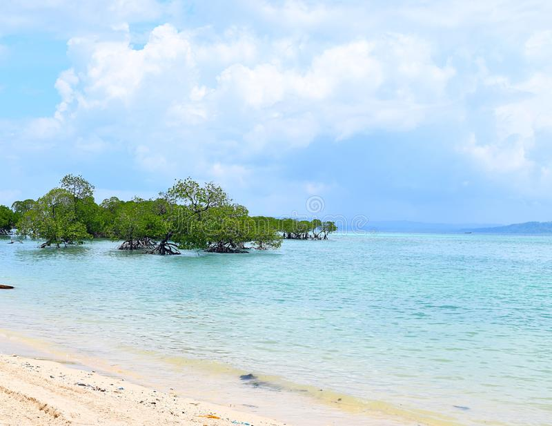 Mangrovebomen in Crystal Clear Transparent Blue Sea-Water met Bewolkte Hemel - Neil Island, de Eilanden van Andaman Nicobar, Indi royalty-vrije stock foto's