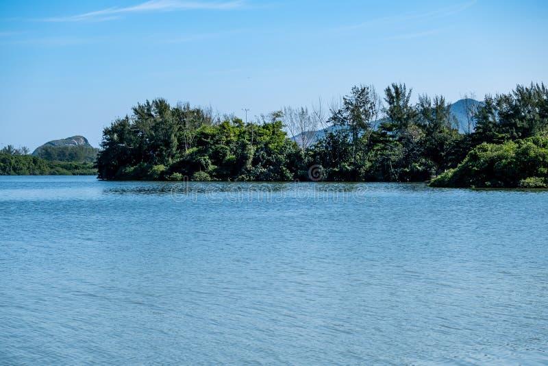 Mangrovebomen en andere vegetatie die op de rand van Marapendi-Lagune kweken, in Barra da Tijuca, Rio de Janeiro stock fotografie