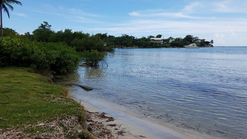 Mangrovebomen en boot in water en strand in Guanica, Puerto Rico royalty-vrije stock fotografie