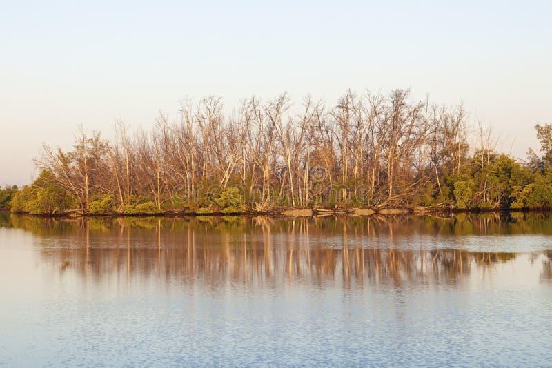 Mangrovebomen en moeras in Florida stock foto