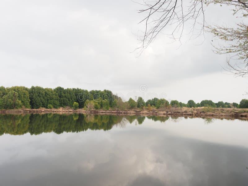 Mangroveboom in intertidal bosbezinning in het water stock afbeeldingen