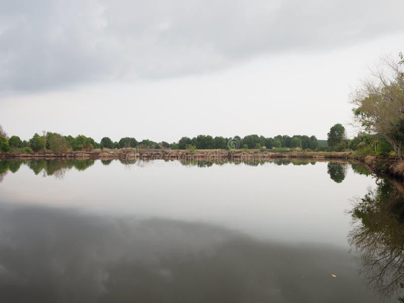 Mangroveboom in intertidal bosbezinning in het water royalty-vrije stock foto