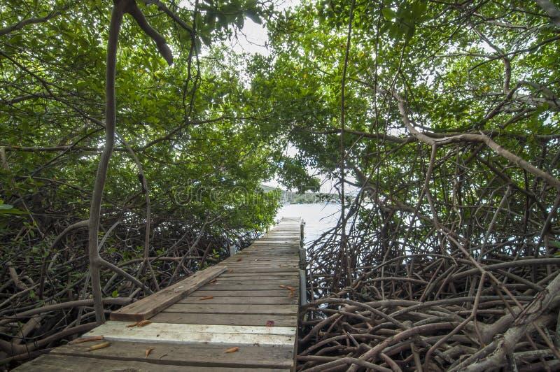 Mangrovebos royalty-vrije stock foto's