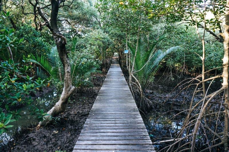 Mangrovebos in de ochtend stock fotografie