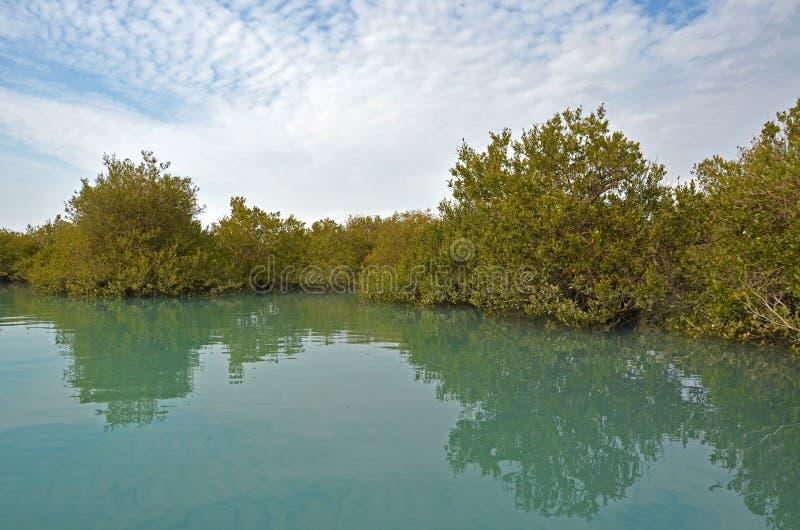 Mangrovebos, Qeshm-Eiland, Iran royalty-vrije stock afbeeldingen