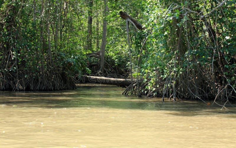 Mangrovebossen langs de Tarcoles-Rivier stock fotografie