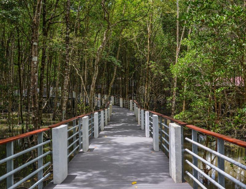 Mangrovedjungel i Langkawi, Malaysia arkivfoto
