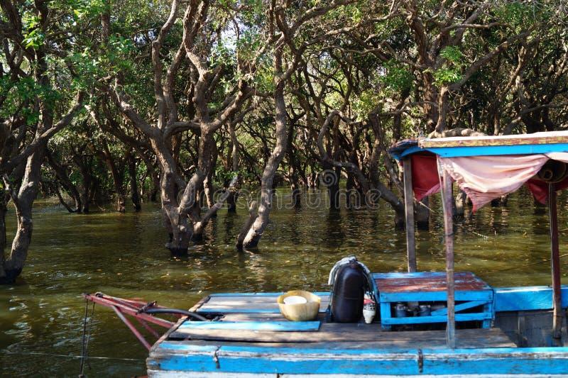 Mangrovedjungler arkivbild