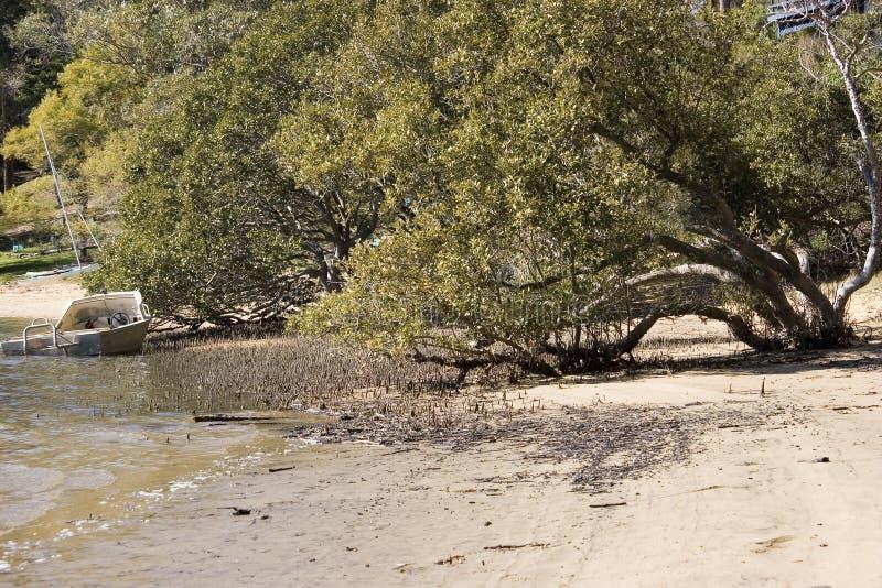 Mangroven en Boot royalty-vrije stock foto's