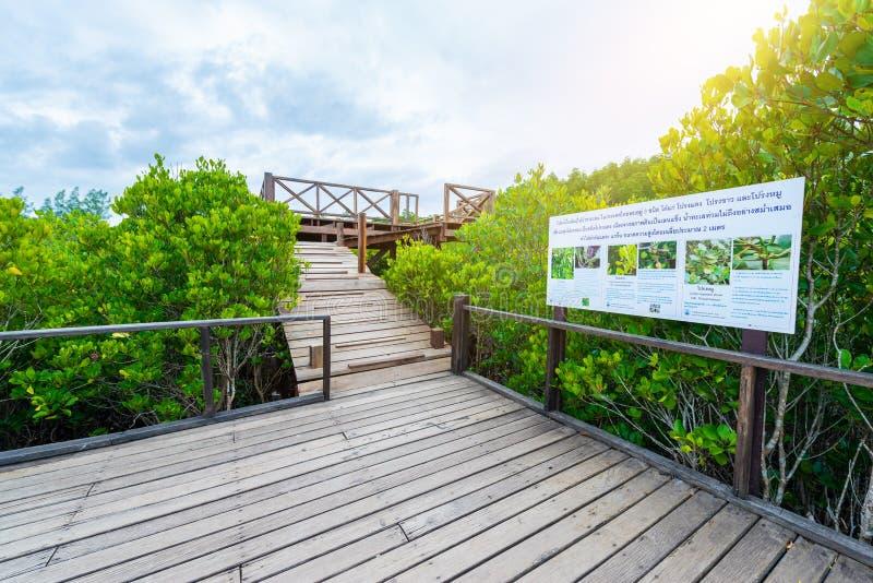 Mangroven inTung Zinken-Zapfen oder goldenes Mangroven-Feld in Mündung lizenzfreies stockfoto