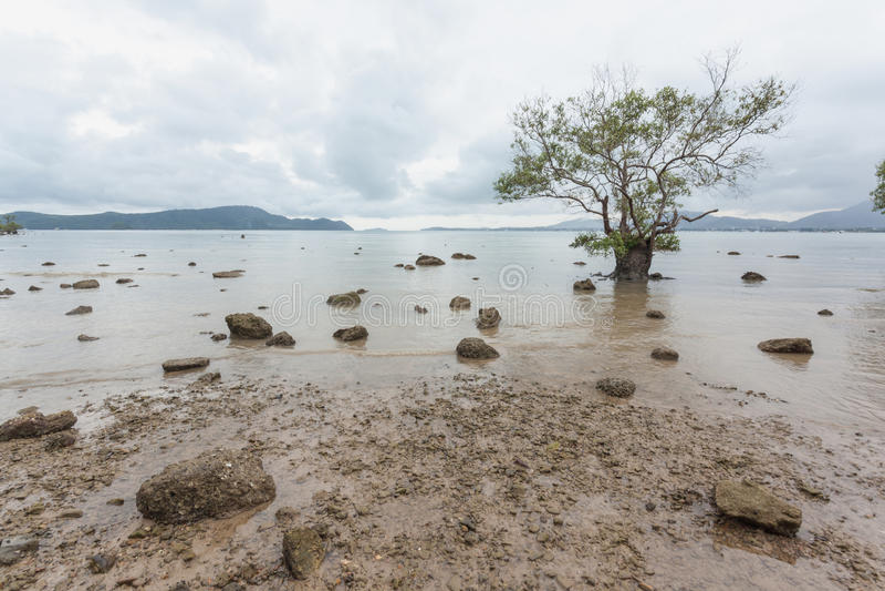 Mangroven nyplanterar med skog royaltyfri foto