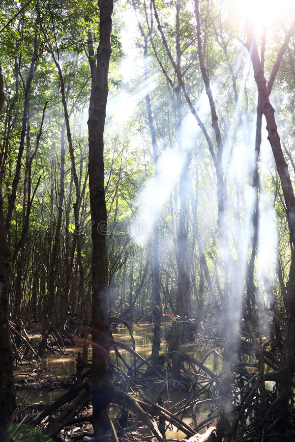 Mangroven-Wälder lizenzfreie stockfotos