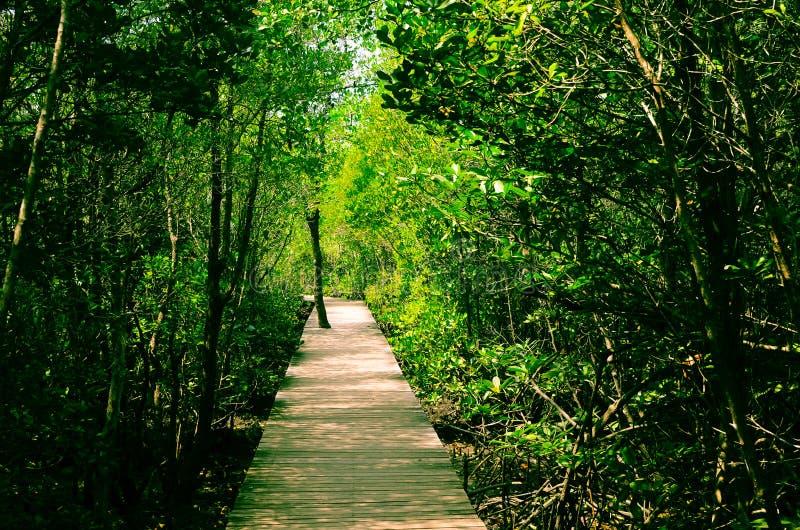 Mangrovenaturforskningscentrum den kungliga insatsen arkivbild