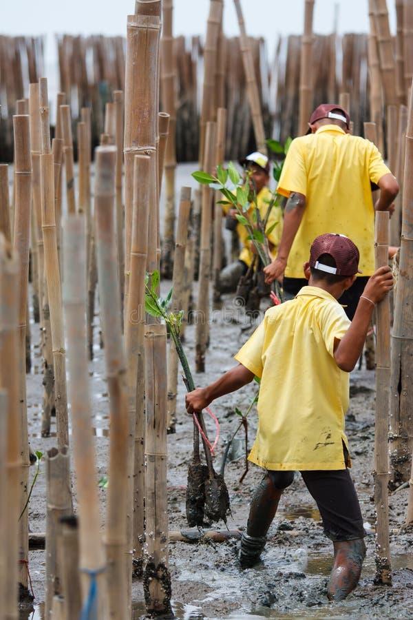 Mangrovenaufforstung in der Küste von Thailand lizenzfreie stockfotos