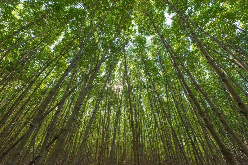 Mangrovenbaum niedrig lizenzfreie stockfotografie