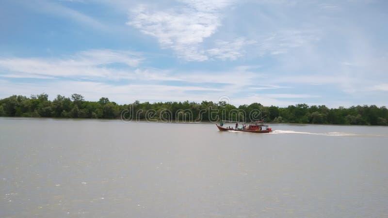 Mangrovenküste Pasir Penampang lizenzfreies stockbild