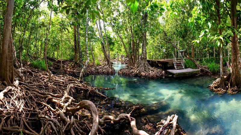 Mangrovenwald-krabi Thailand lizenzfreies stockfoto