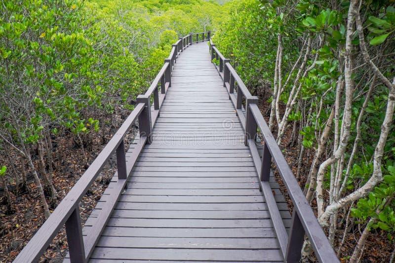 Mangrovenwald mit hölzerner Brücke lizenzfreie stockbilder