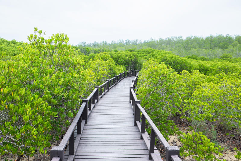 Mangrovenwald mit Holz lizenzfreie stockfotos