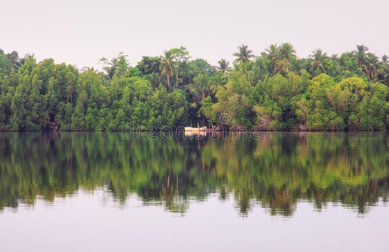 Mangrover del fiume, Sri Lanka immagine stock