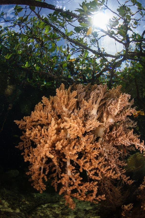 Mangroverand, Radja ampat, Indonesië 03 royalty-vrije stock fotografie