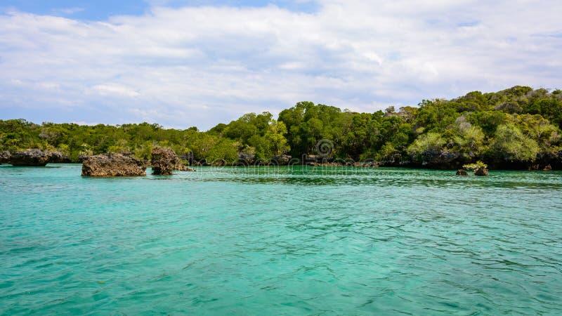 mangroves imagem de stock