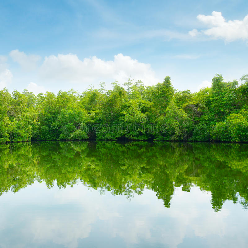 Download Mangroves And Blue Sky Stock Photo - Image: 38661740