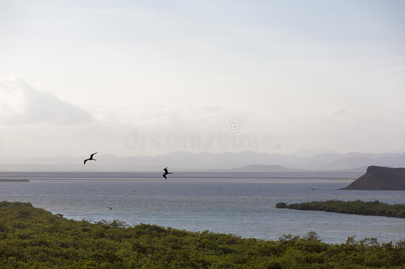 Mangroves and coastline near Punta Gallinas in La Guajira. Aerial view of mangroves and birds flying on the coastline near Punta Gallinas in La Guajira, Colombia royalty free stock photography