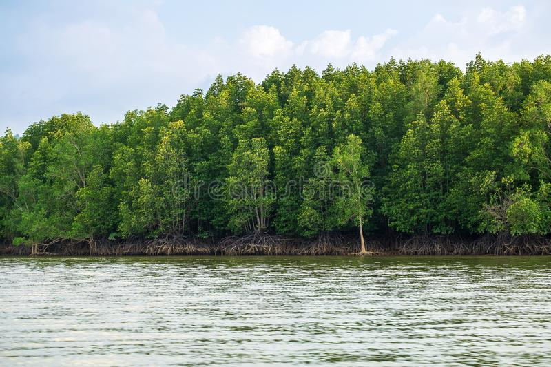 Mangroves Forrest by the Sea, Very Beautiful Green Mangrove island in Thailand.  stock photos